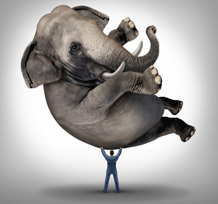 hombre levanta a elefante con sus brazos