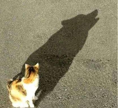 sombra engañosa